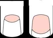 貝爪さんのフレンチスタイル(ショート)