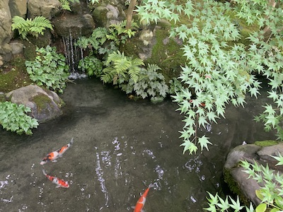 瑠璃光院・お庭の池